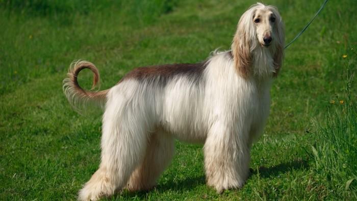 Охотничья порода собак