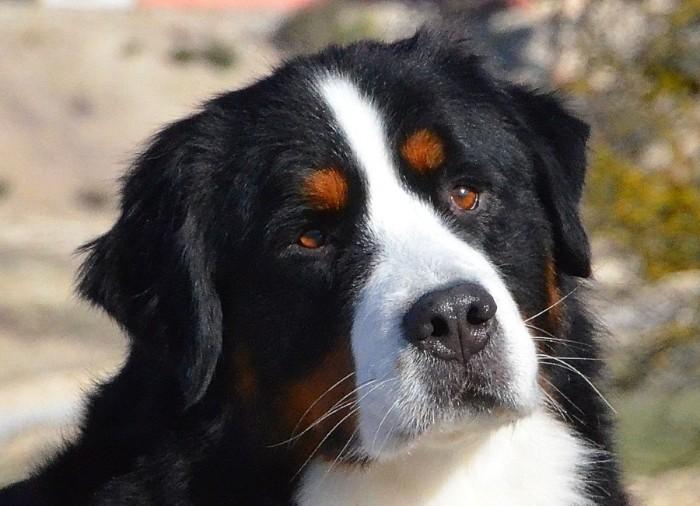 Универсальная собака