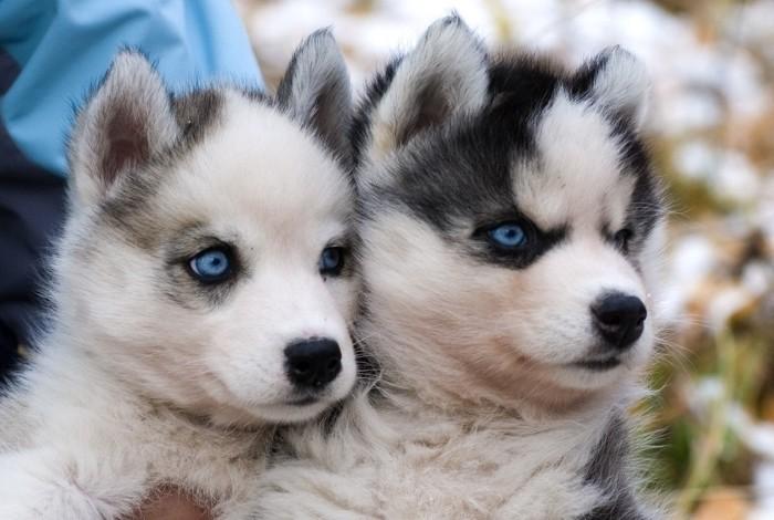 Крупные и красивые собаки