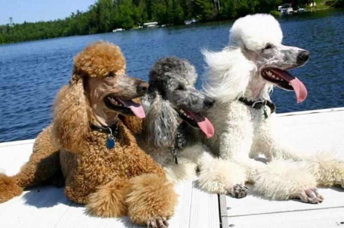 Цвет собаки