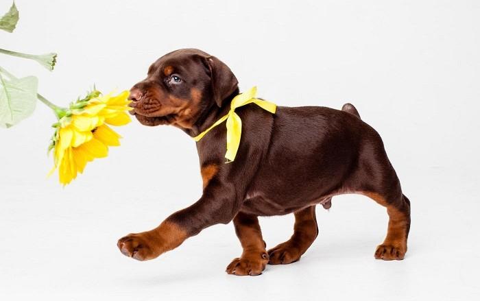 Особенности кормления щенка