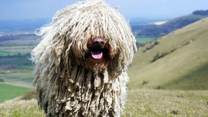 Порода собак