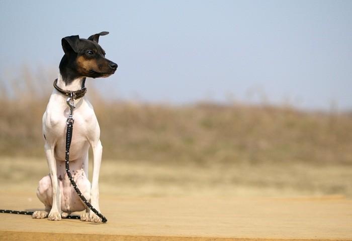 Здоровье собаки