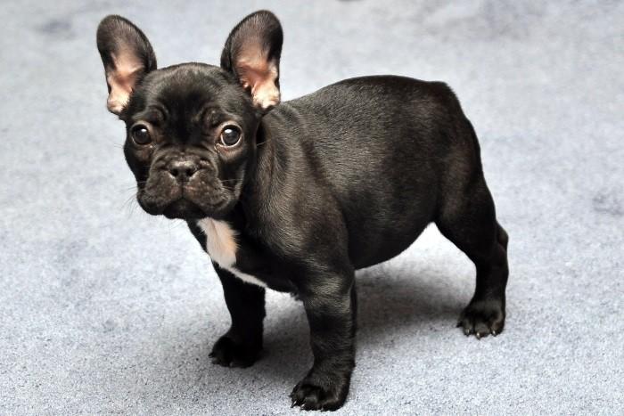 Рацион щенка