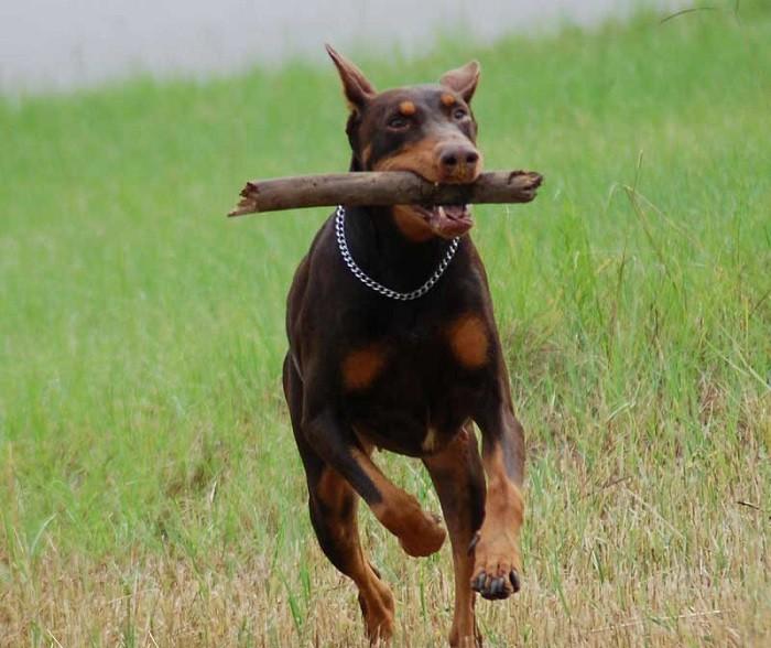 Выгул пса