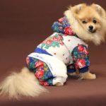 Одежды и аксессуаров для собак