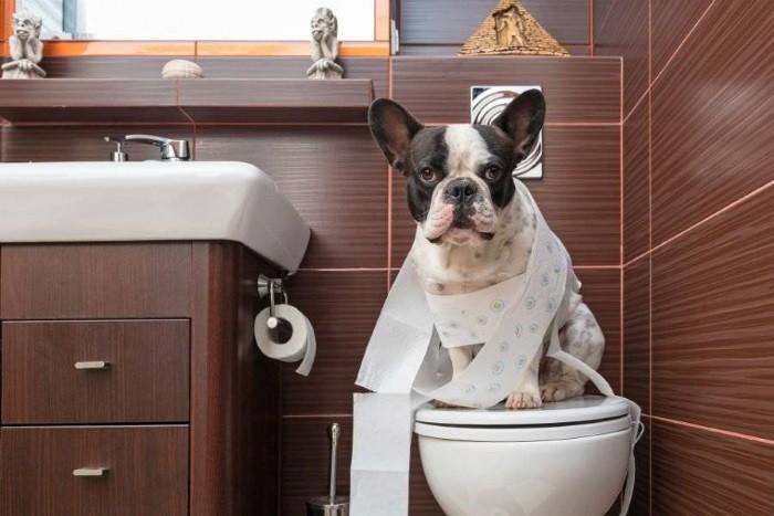 Команда «туалет»
