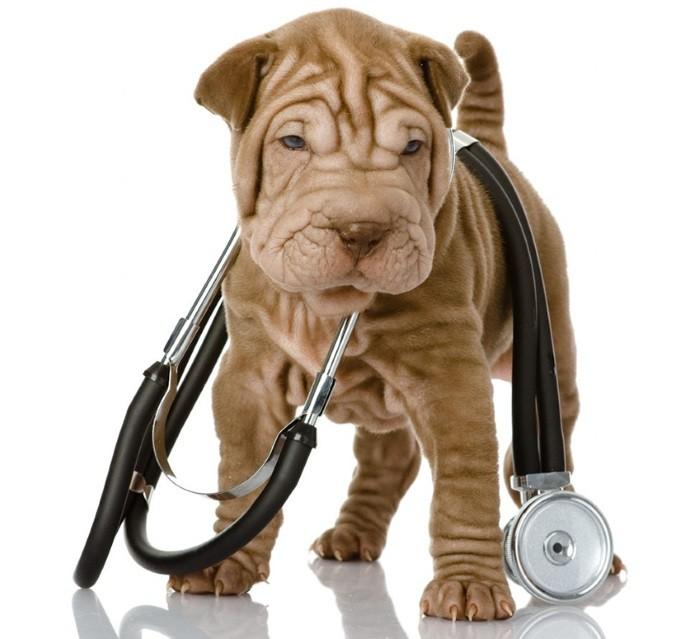 Рекомендации ветеринара