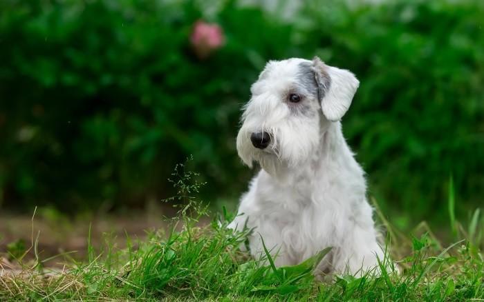 История породы собак