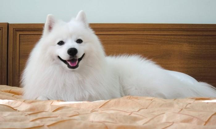 Чистоплотная собака
