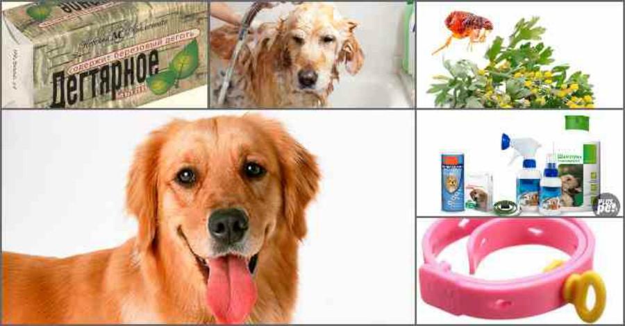 Блохи у собак: как избавиться и избежать их повторного появления