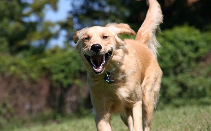 Барс от блох и клещей для собак