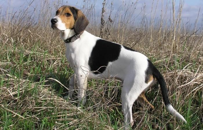 Основной профиль собаки