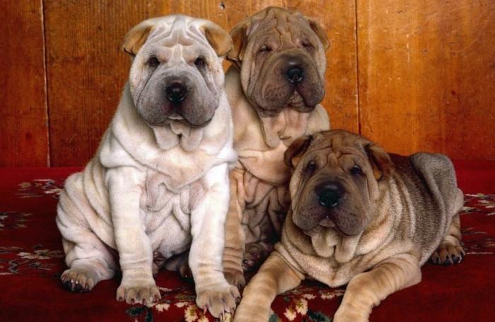 Расцветки собак