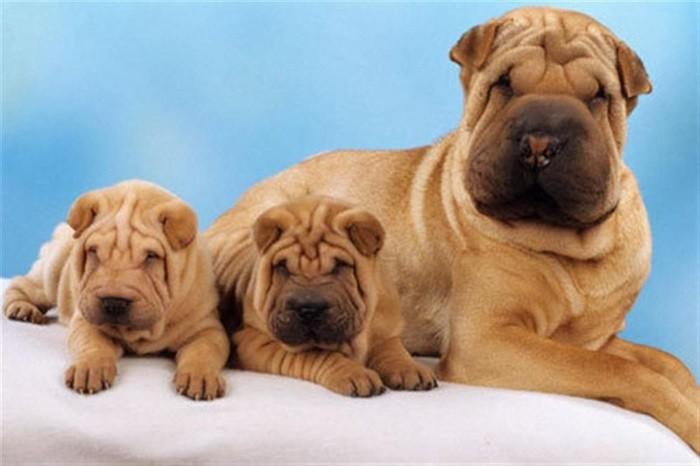 Вес и рост собаки