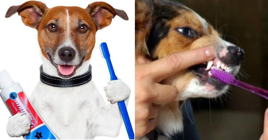 Зачем и как чистить зубы собаке
