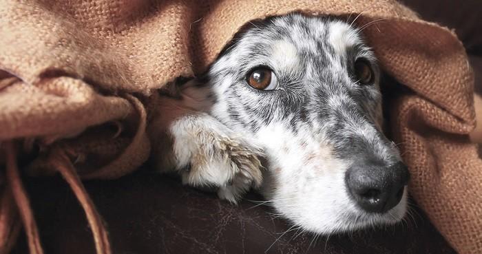 Профилактика для собаки
