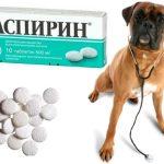 Аспирин поможет собаке