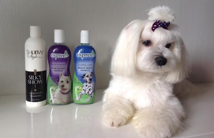 Белым собакам