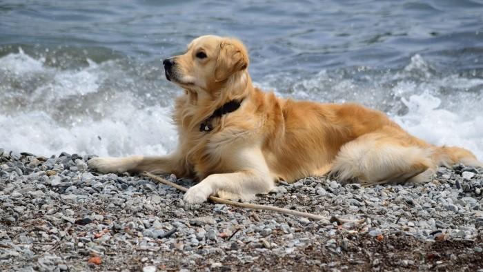 Плаванье в море
