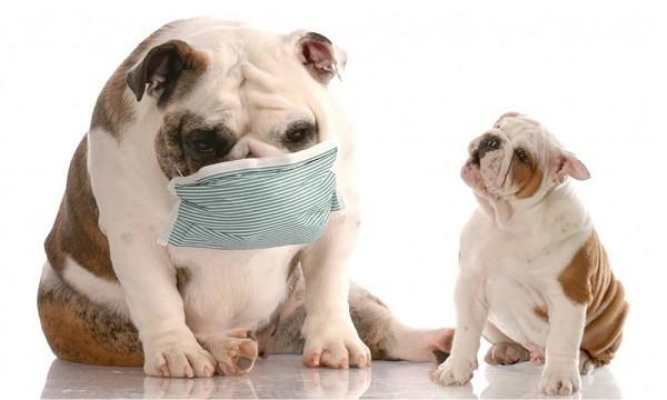 Аллергия у собак 1