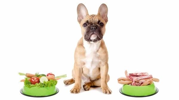 Аллергия у собак 3