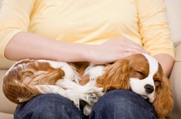 Почему собака вылизывает хозяина 6