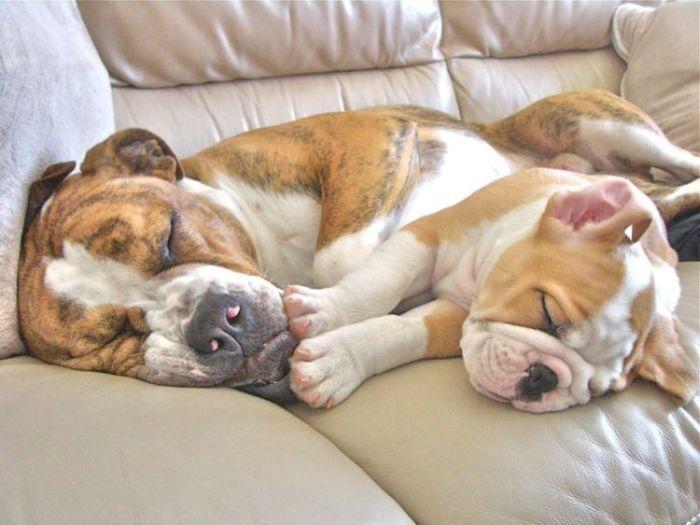 Сколько спят собаки в сутки 1