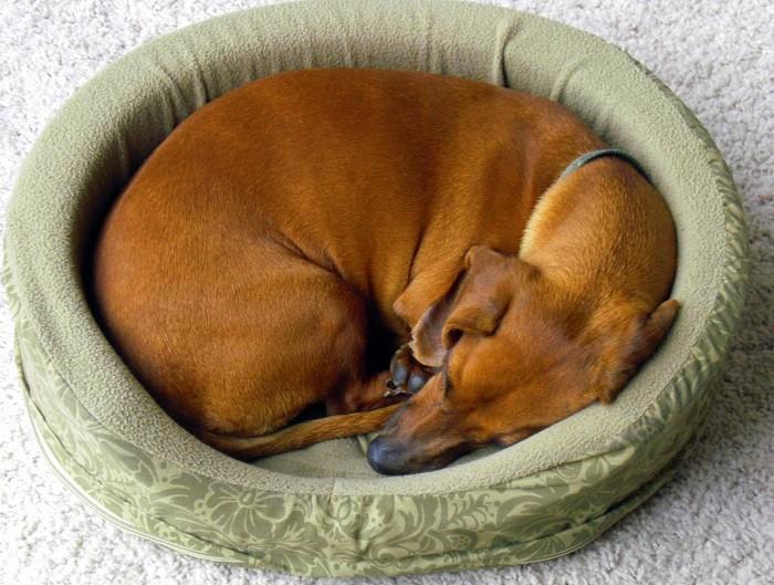 Сколько спят собаки в сутки 3