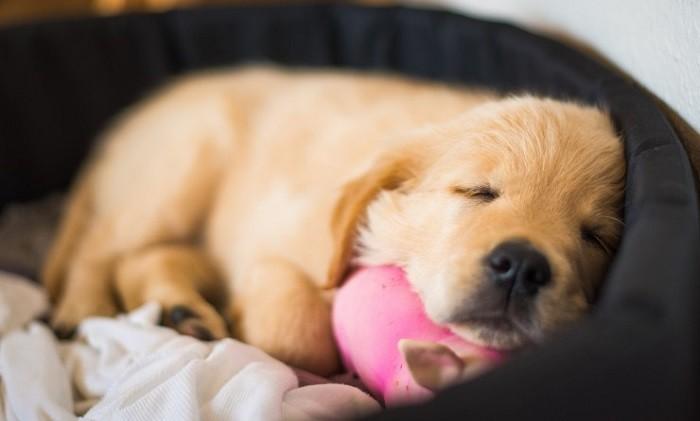 Сколько спят собаки в сутки 4