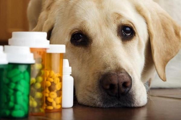 Как дать собаке таблетку