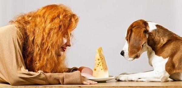 Можно ли собакам сыр