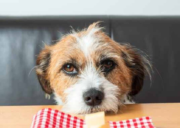 Можно ли собакам сыр 7