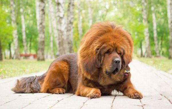 Самая большая собака в мире 3