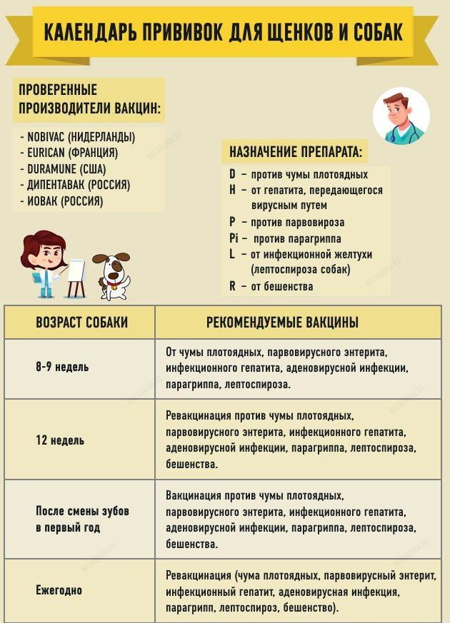 privivki-shhenkam1