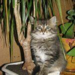 Как отучить кошку гадить в неположенном месте1